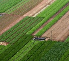 河北 唐山 路北区 耕地 菜地 2亩 转让