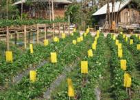 佳木斯同江地区4500.00亩农场转让 价格面议