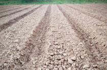 新疆 察县牧场6000亩 旱地 转让