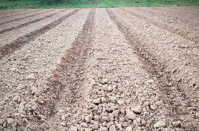 长沙长沙县 20.00亩 旱地 转让价格面议