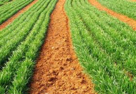 黑龙江哈尔滨道里区6亩耕地 — 旱地转让