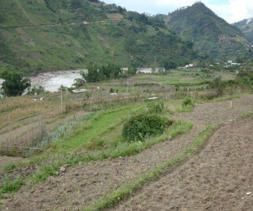 安徽 合肥 长丰县 耕地 旱地 2亩 转包