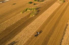 山东临沂郯城县200亩耕地 — 旱地转让