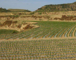 出租合肥肥西县2000.00亩水田旱地,我们免费提供有机肥