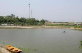 江苏盐城射阳县30亩水域及水利设施用地 — 坑塘水面转让