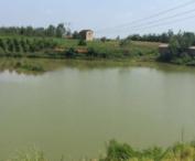 甘肃酒泉肃州区 150亩 坑塘水面 转让 10年 面议