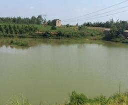 成都双流县 40.00亩 坑塘水面 转让价格50.0万元