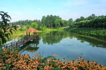 随县均川50.00亩池塘出租价格100.0元/亩/年