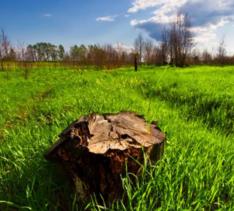 5500亩天然草地转让