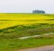 河北秦皇岛山海关区100亩其它草地转让