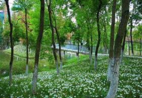 河南郑州登封380亩林地 — 其他林地转让