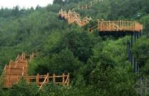 转让:阳江阳东县5000亩国有林场