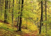 40000万亩商品林地寻找合作
