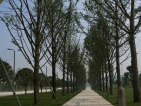 上海松江区 30亩 其它林地 转让