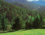 江西吉安安福县3874亩林地转让
