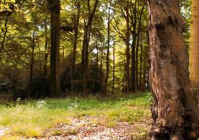 兴安盟林地转让800亩