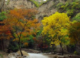 山东济南平阴县180亩林地 — 其他林地转让