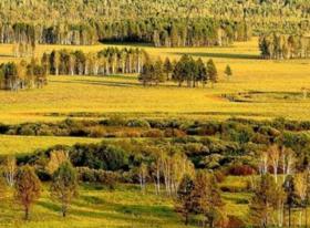 山西忻州岢岚县10000亩林地 — 其他林地出租