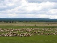 黑龙江绥化安达市1000亩畜牧场转让 面议