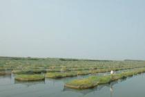 1700亩水产养殖基地池塘出租