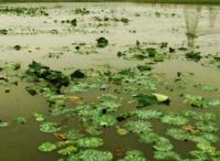 南通如东县10000亩海淡水养殖用地出租