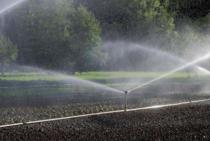 辽宁50-60亩水浇地出租