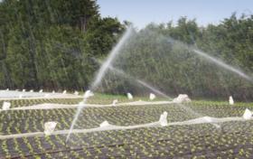 石家庄平山 300.00亩 水浇地 出租价格1000.0元/亩/年