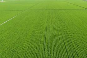 江苏常州武进区600亩耕地 — 水浇地转让