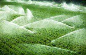 陕西西安蓝田县320亩耕地 — 水浇地出租