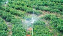 600亩滴灌农用地出租
