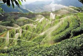 云南昆明嵩明县32亩耕地 — 水浇地转让