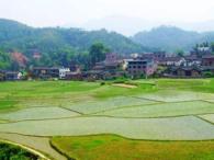 黑龙江齐齐哈尔泰来县1500亩水田转让
