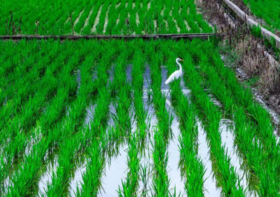 江西宜春500亩农用地出租 500元/亩/年