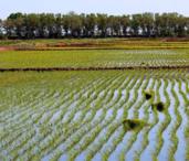 罗江白马关景区25.00亩草莓采摘园转让。价格4.0万元