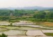 贵州 铜仁 德江县 耕地 水田 800亩 转包