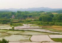 韶关市乳源县800亩绿色蔬菜基地流转