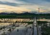 江西九江共青城353亩耕地 — 水田出租
