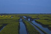 600亩稻田地转包