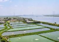海南三亚市辖区6亩耕地 — 水田出租