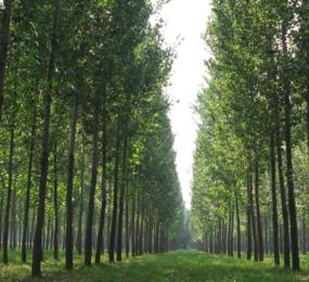 海南海口屯昌 500亩林地 水电齐全 交通便利