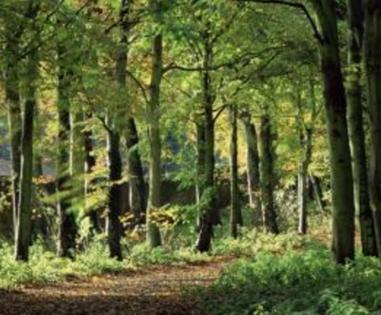 海口50亩林地 树木茂盛 地段好 电影公社旁 交通便利