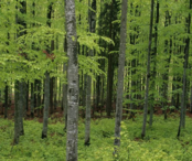 巢湖2000亩农业用地、林地转让