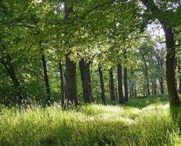 成都邛崃市50.00亩山地 林地 苗圃转让