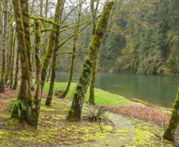 急售370亩林地,41年使用权