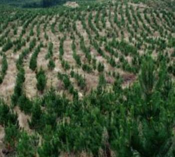 急转林地370亩41年使用权